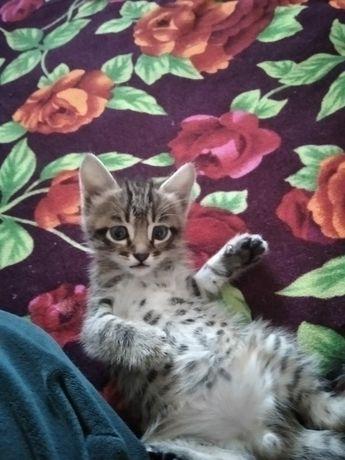Котята,отдам в добрые руки