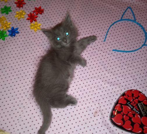 Милые котёнки отдам в добрые руки