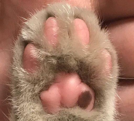 Ласковый котик даром