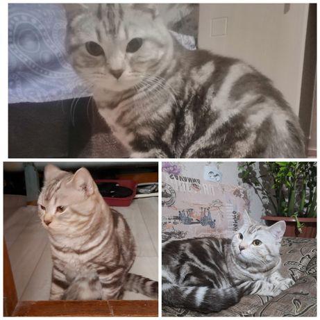 Продам котёнка 1 месяц ей