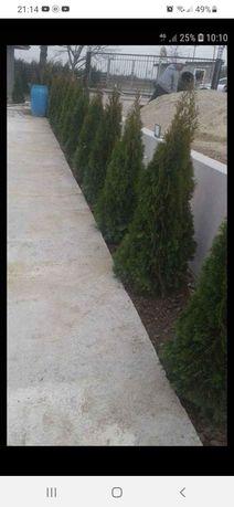 Plante ornamentale etc