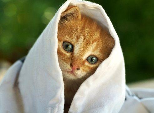 Луша, Симба, Герда, Клёпа, - ЛУЧШИЕ кошки от Фонда ЗЖ
