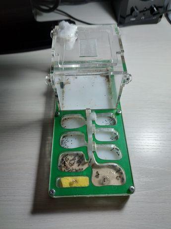 Формикарий вместе с муравьями