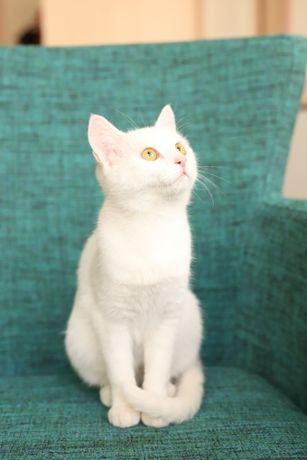 Кошка по имени Картошка (9мес., стерилизована, привита) ищет дом