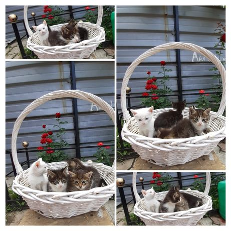 Продам котят 2. 5 месяцев два мальчика и два девочек очень умные