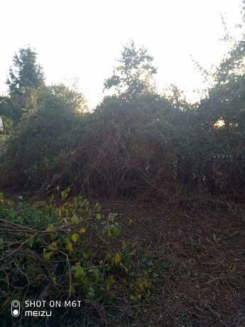 Почистване, чистене на дворове и градини, рязане на дървета и клони