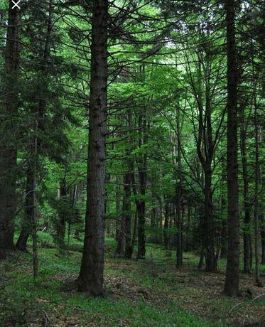Pădure de fag, stejar,tei