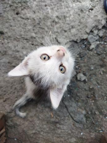 Отдам котят  бесплатно