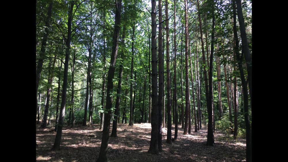 Земя - гори, село Антон, до стадион, на Подбалканският път