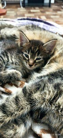 Котенок мальчик Кузя