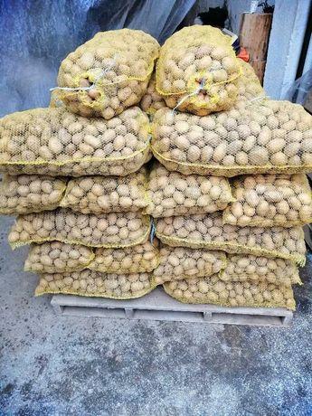 Картофи семе сорт Сорая клас (А) и (Б)