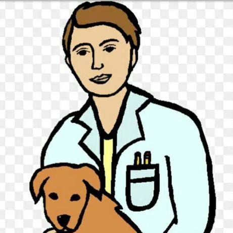Усыпление собак, вывоз, вакцианация с паспортом и другие вет.услуги Це