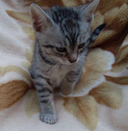 Donez pisica. Are 2 luni