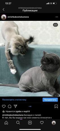 Стрижка кошек-кроликов с выездом