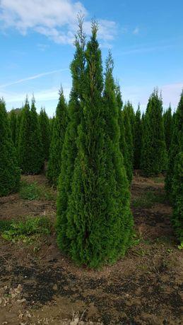 Vindem plante ornamentale de calitate extra