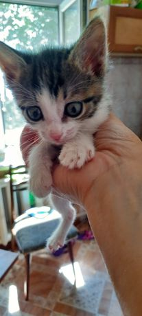 Отдам котят, любителям кошек