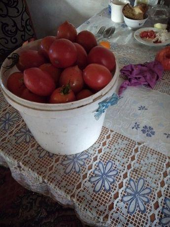 Продаю помидоры дебаркидо