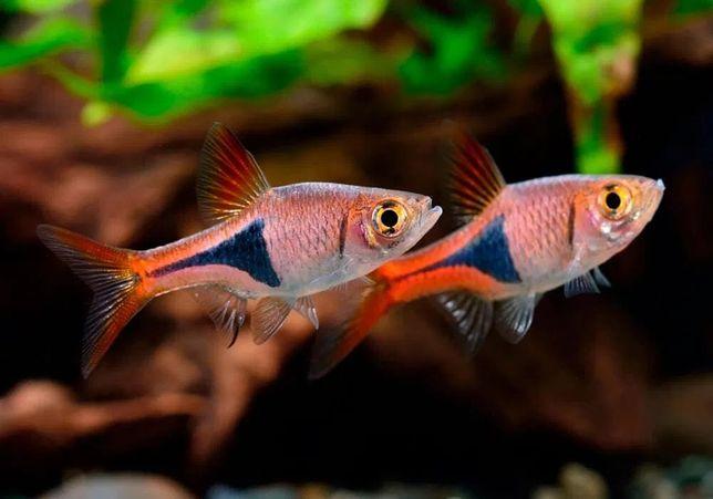 Продам разных аквариумных рыбок