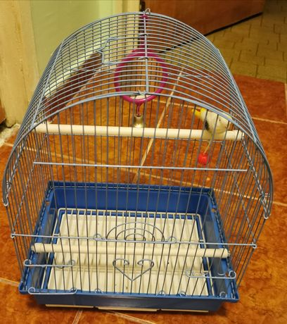 Cușcă albastra perusi