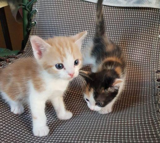 Отдам котят, мать мышеловка!