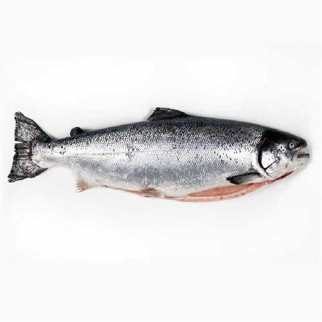 Рыба Семка лосось чистый