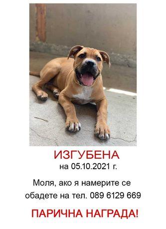 Изгубено куче в района на град Правец, парична награда