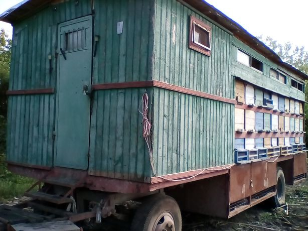 Pavilion apicol 70 stupi