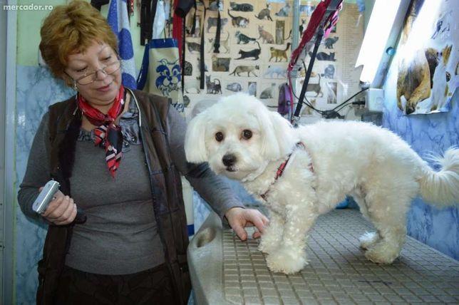 Frizerie canina si felina - Pet shop ALFAPET E3, Tulcea