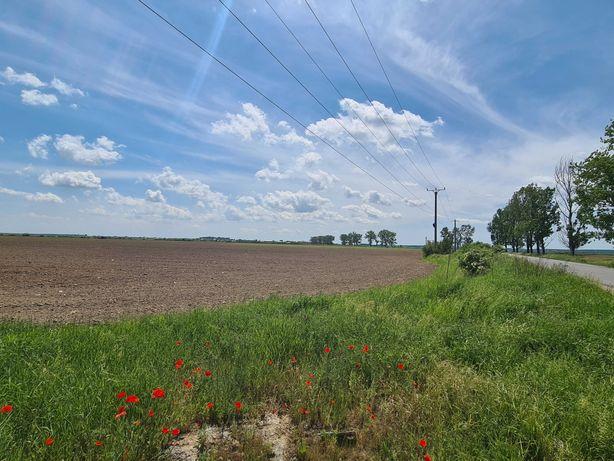 Teren agricol 15000mp extravilan Ulmi