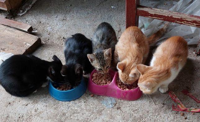 Pisici pisoi Gratis