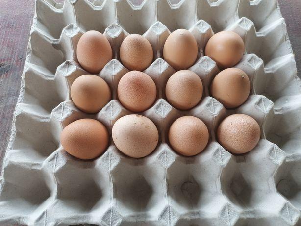 Oua bibilica pentru consum.
