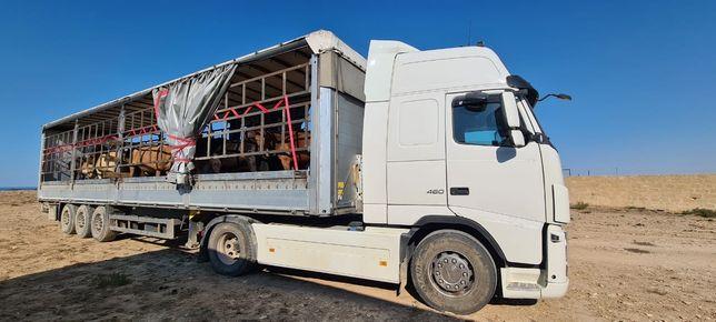 Скотовоз доставка скот