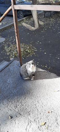 Найден серый кот