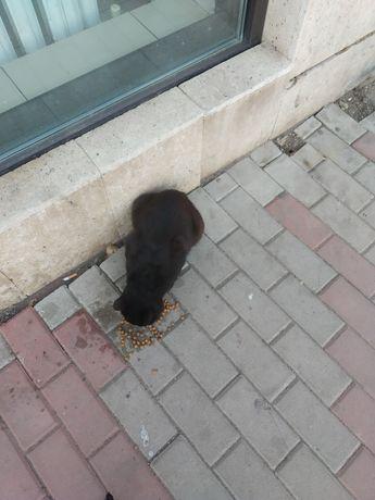 Черный крупный кот