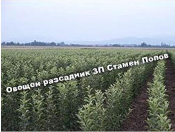 Овощен разсадник- всички видове
