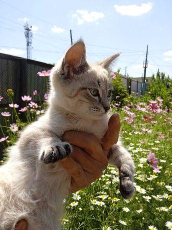 Котенок - мальчик в добрые руки