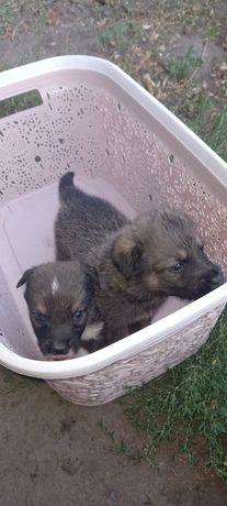 Отдам милых щенят. 6 малышей ищут добрых и любищих хозяев.