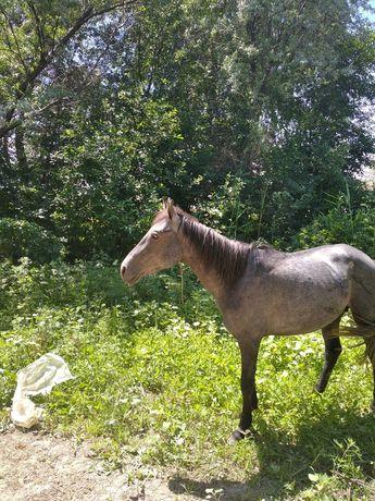 Продам лошадь жеребца