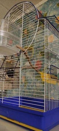 Продам волнистого попугайчика с клеткой