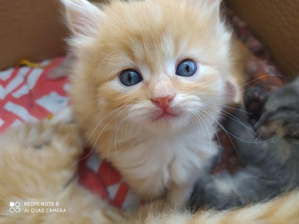 Отдам котят в хорошие руки)