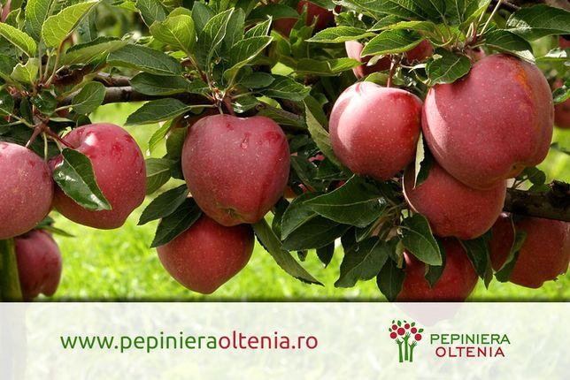 Puieti pomi fructiferi