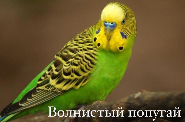 """Волнистые попугаи в зоомагазине """"ЖИВОЙ МИР"""""""