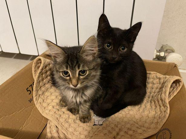 Добрые и ласковые котята