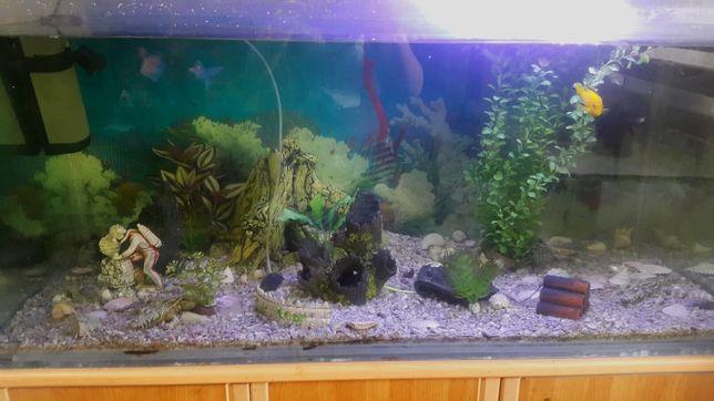 Продам аквариум 350л с тумбой