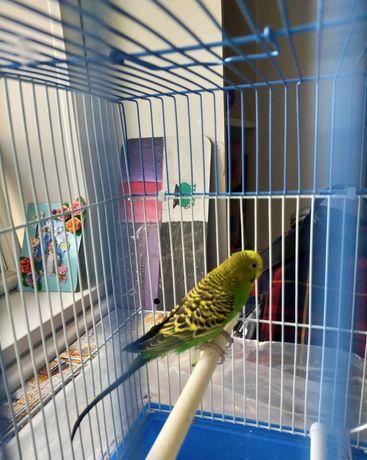 Продаю попугай самка