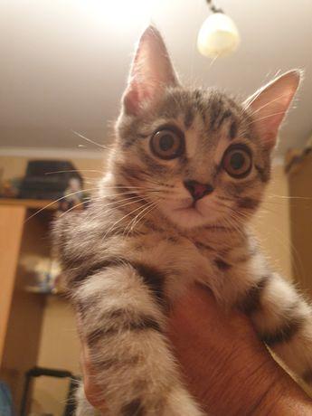 Отдается котик в добрые руки