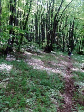 Уникална вила в гората, чист въздух, супер антикризисна мярка - имот