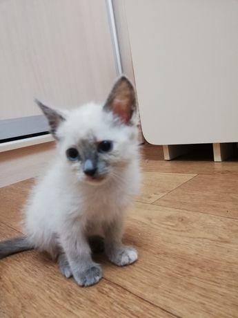 Отдам даром котёнка