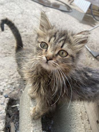 Котята крысоловы