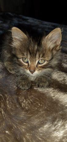 Котенок за даром